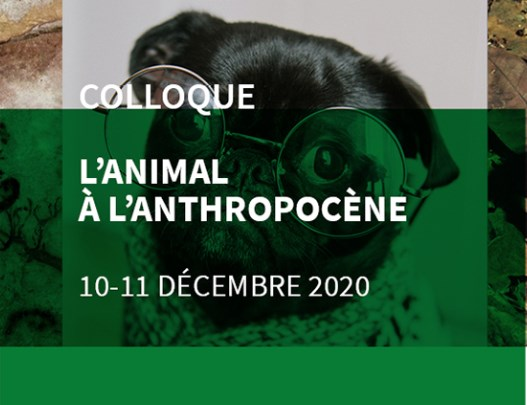 "Colloque ""L'Animal à l'Anthropocène"" les 10 & 11 décembre 2020"